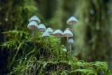 conf-rence-champignons-149